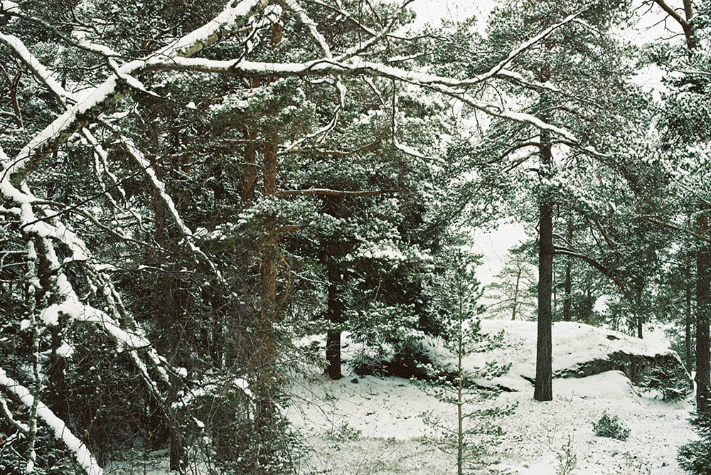 Forest under the snow in Korpo by Brian Cheung